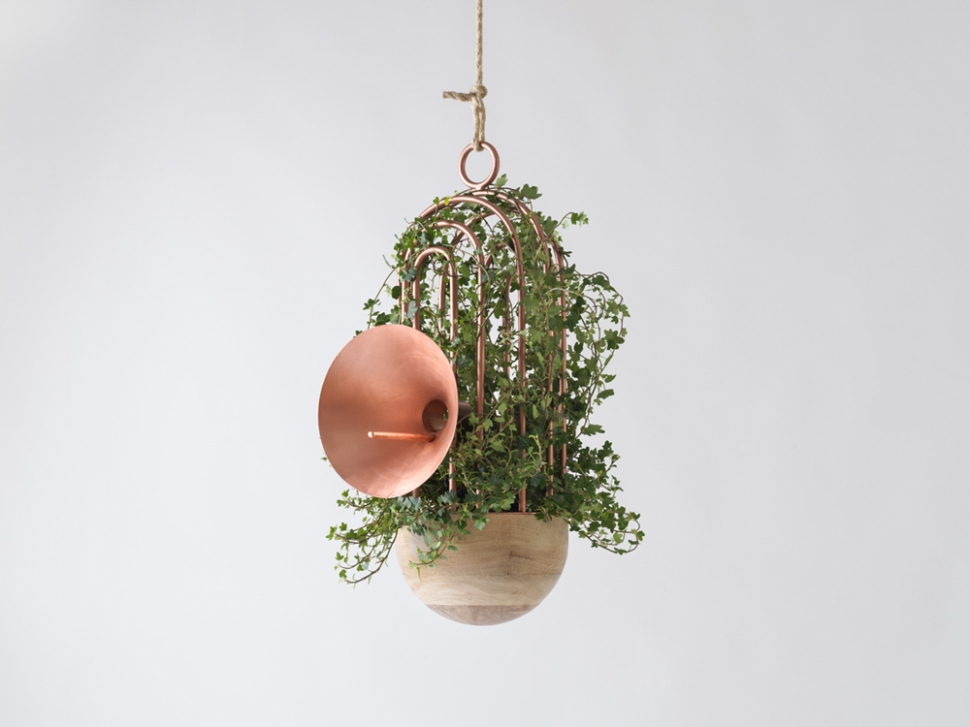 Copper oratory birds nest